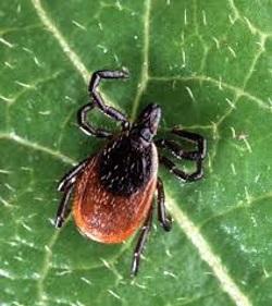 Ziekte van Lyme gestructureerd aangepakt