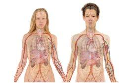 SANULOGIC onderzoekt alle organen